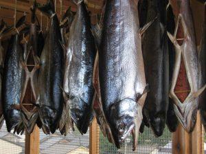 小針水産マルト塩引鮭干し風景